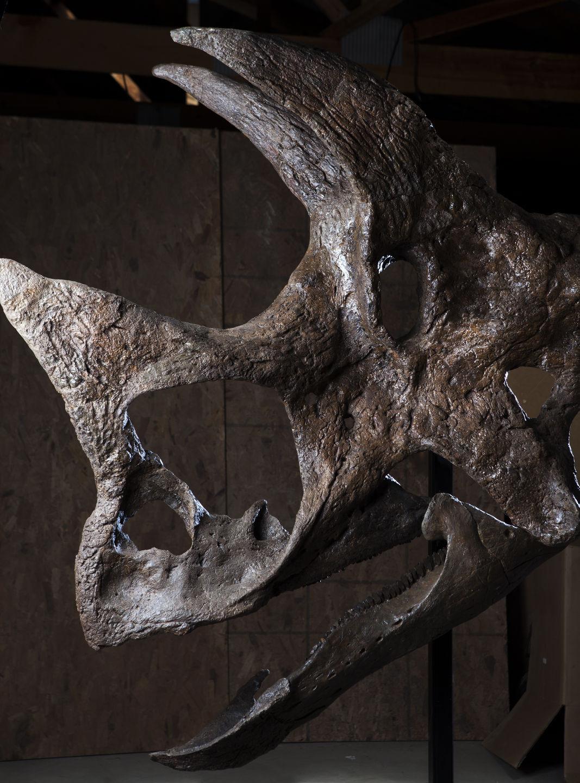 082715-nws-skull002.JPG