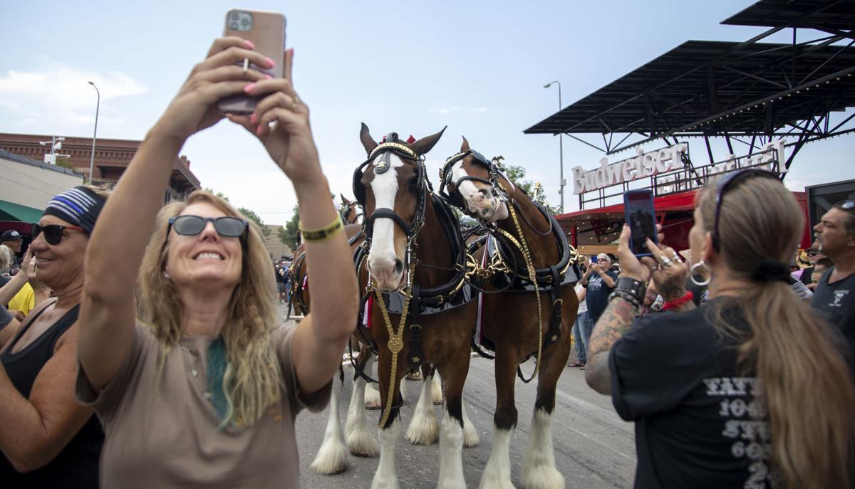Horses-crowd-photos