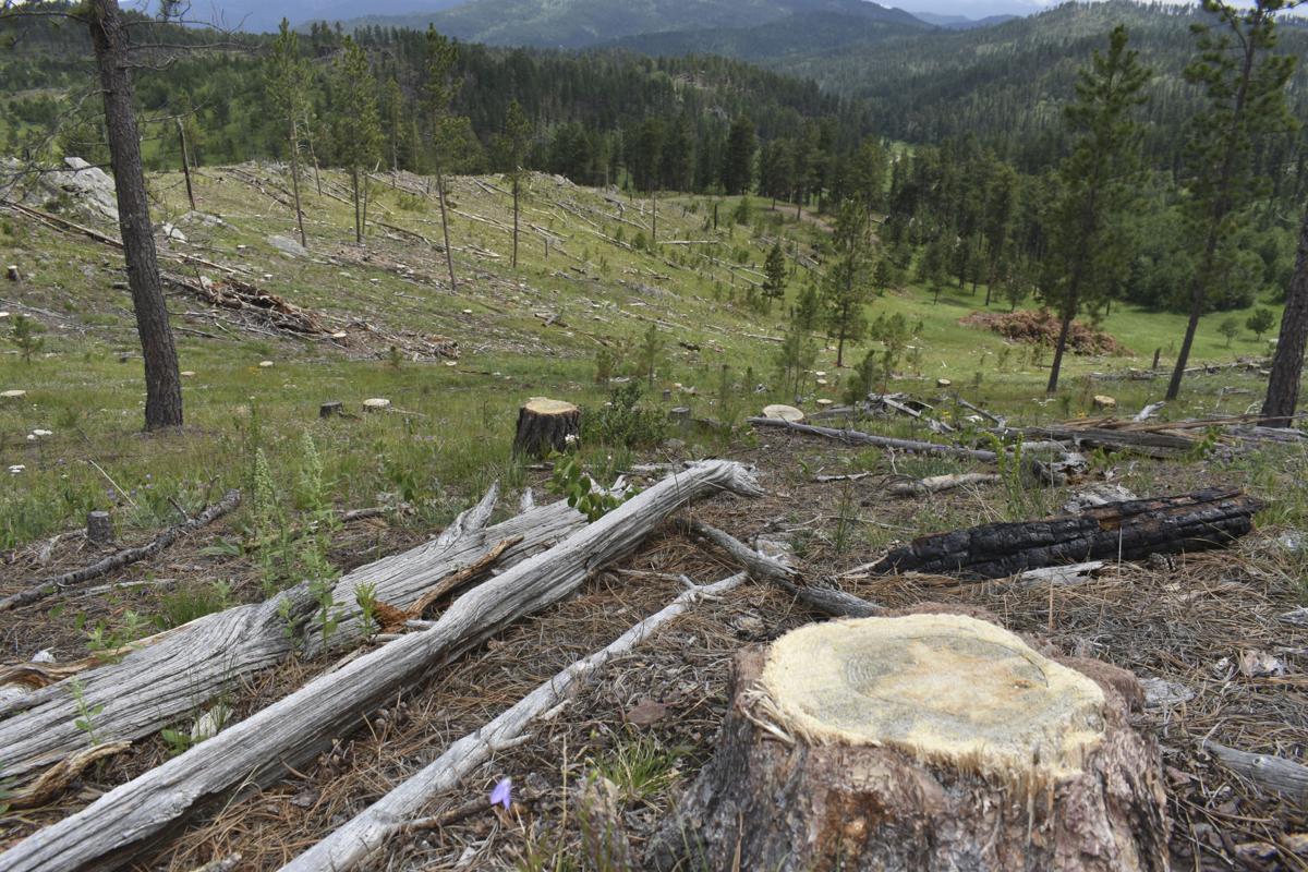 Logging Old Trees 2