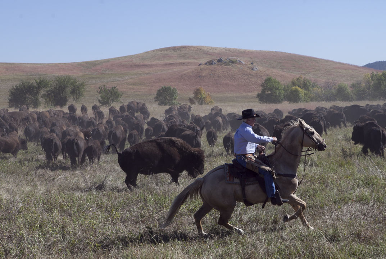 092615-nws-buffalo001.JPG