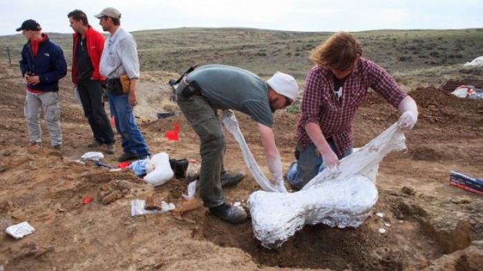 Rare, nearly complete skeleton of triceratops unearthed in Wyoming