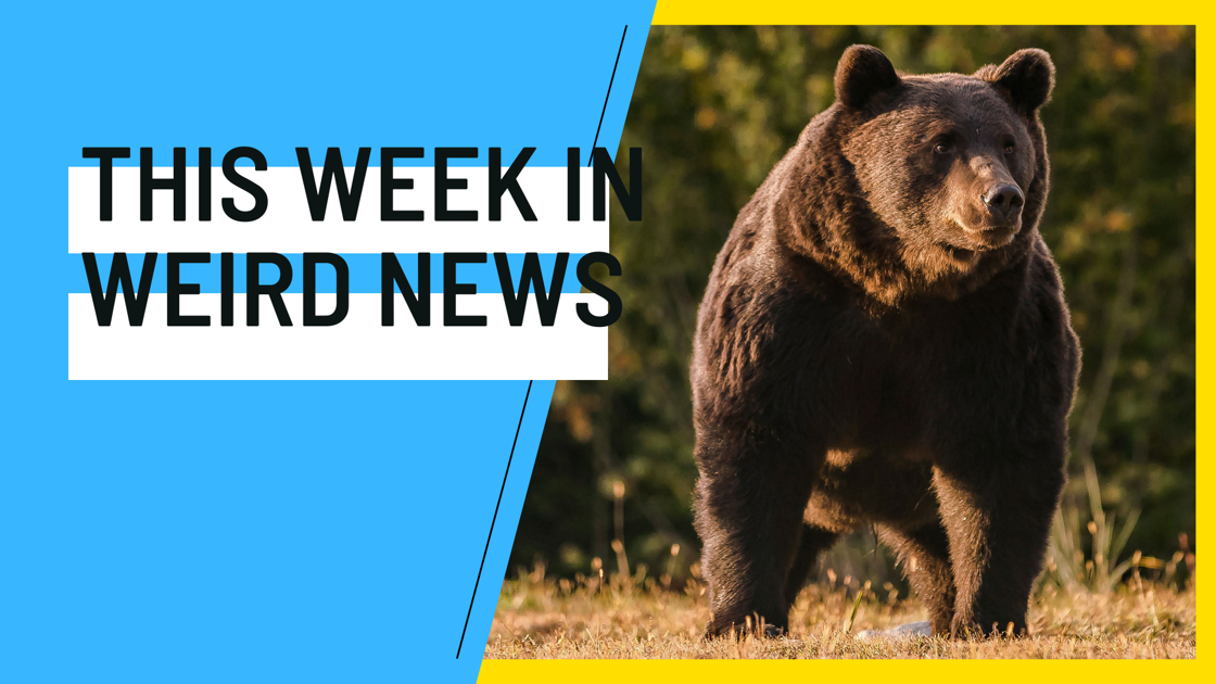 A Liechtenstein prince is accused of killing one of Europe's biggest bears, and more of this week's weirdest news