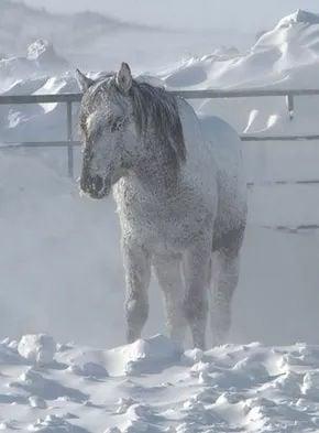011017-nws-horses
