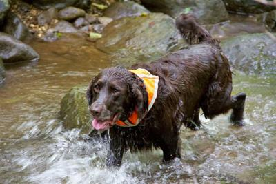 Visit NC for Fun-Filled Day Trips With Your Pooch! (image)