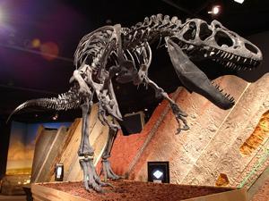 Dino Discovery!
