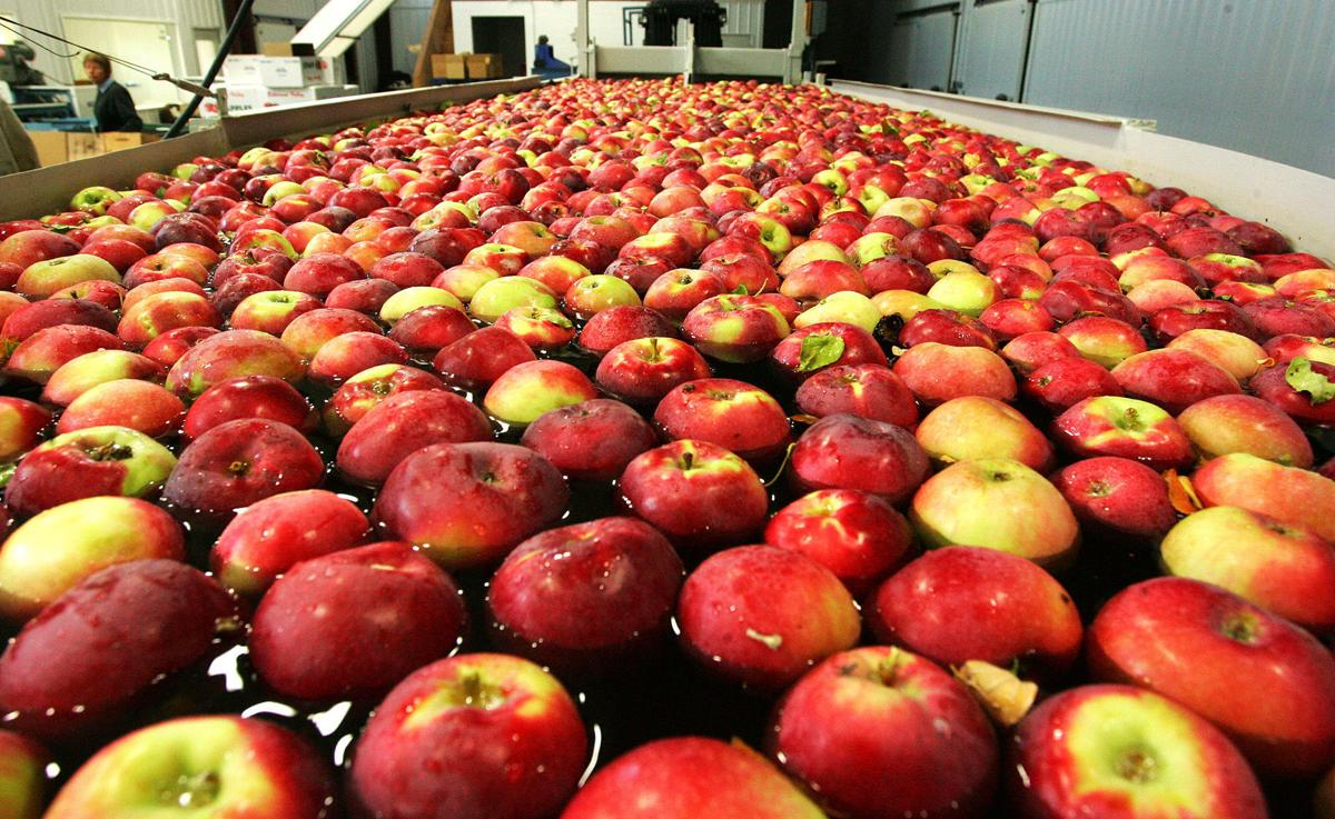 Experimental control of codling moth in apples includes bagging fruit