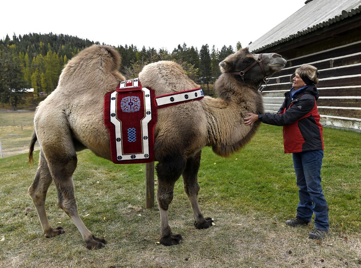 Carlos the Camel 3