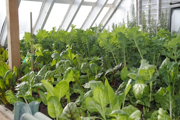 Winter Garden Couple Builds Greenhouse Designed For Growing Vegetables In Colder Seasons