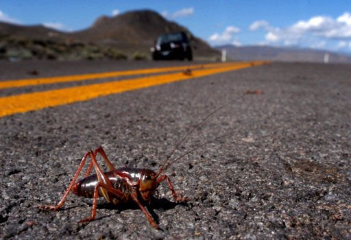 Insect attack! US West is battling crop-killing swarms