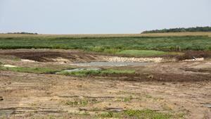 Restoring wetlands more popular for landowners