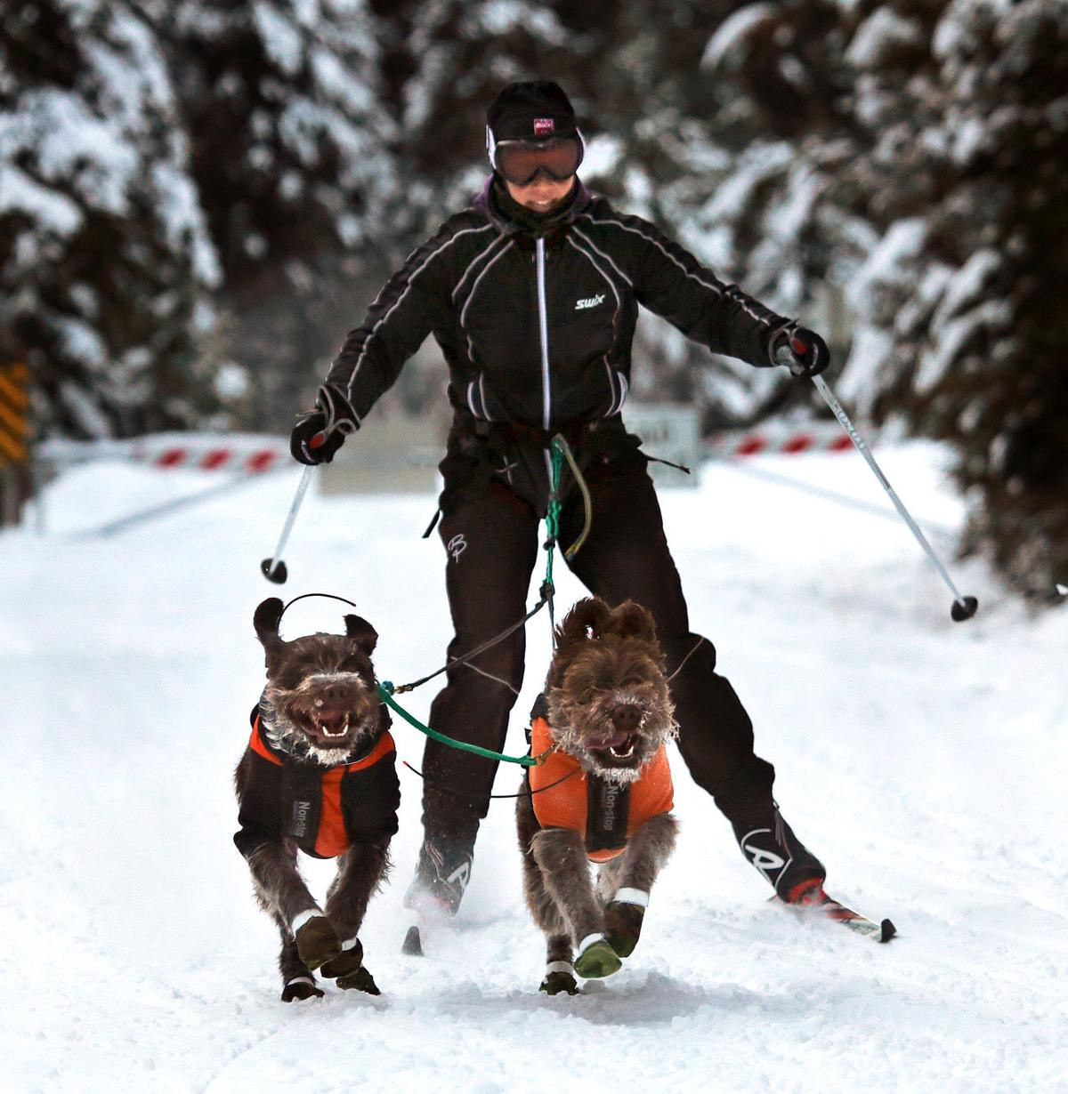 Teresa Petterson 2, skijoring, Darby Dog Derby