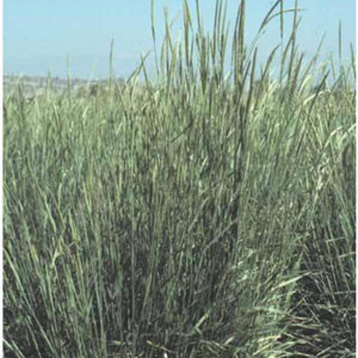 Beartooth Seed Raises Certified Grass Seed And Legumes For Top Seed