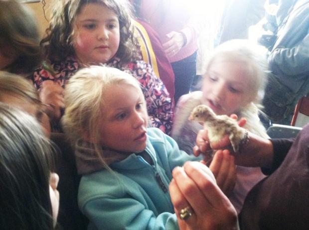 The kids got to pet baby turkeys