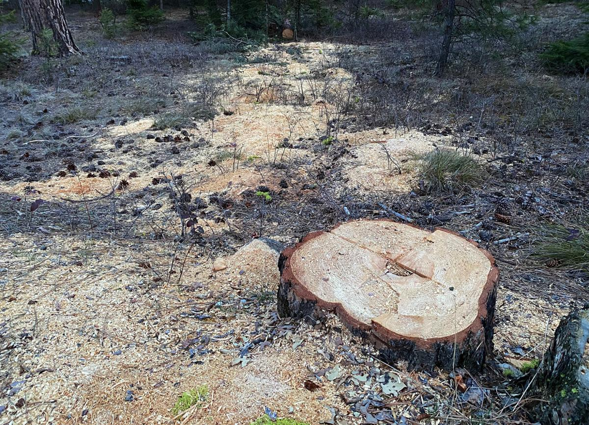 Bitterroot Forest asks for public help in stopping illegal logging