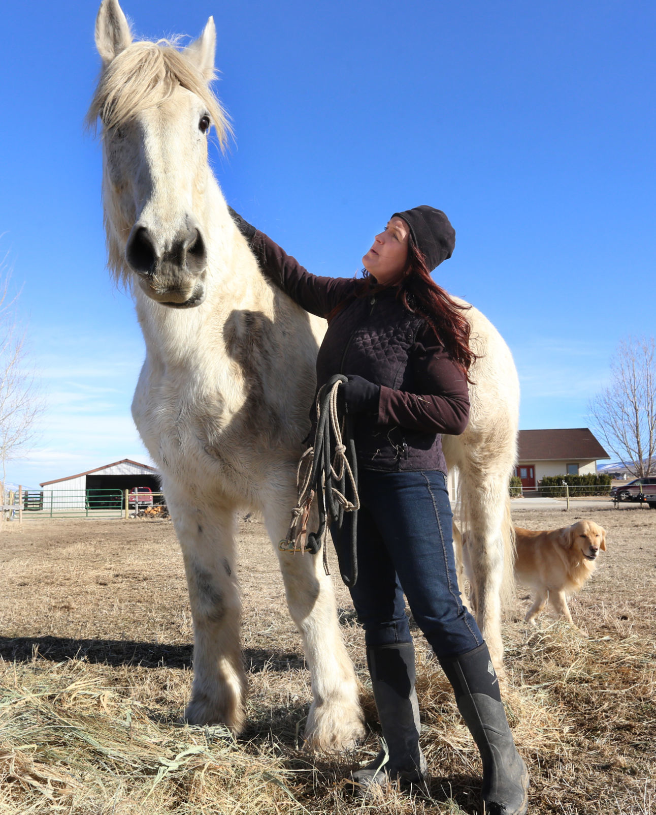 One Horse At A Time Corvallis Woman Rescues Draft Horses Local News Ravallirepublic Com