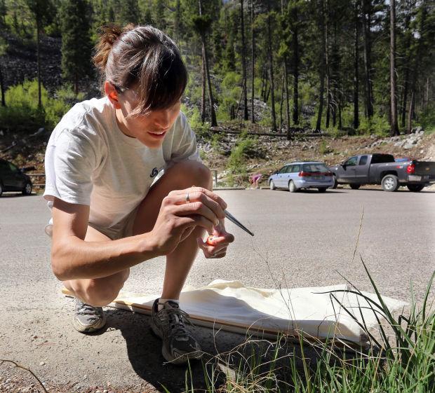 Colorado tick fever study published