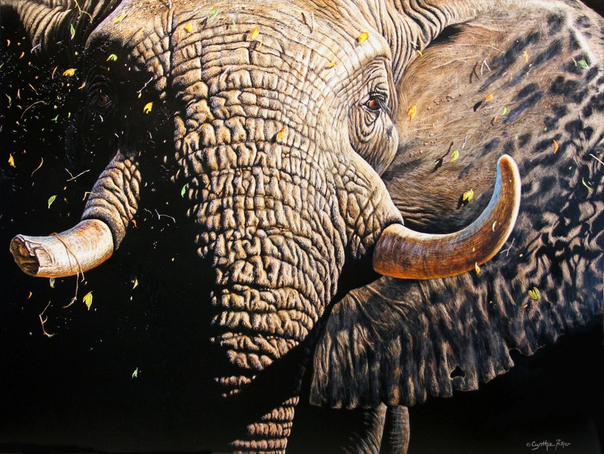 MPAA Elephant Fisher
