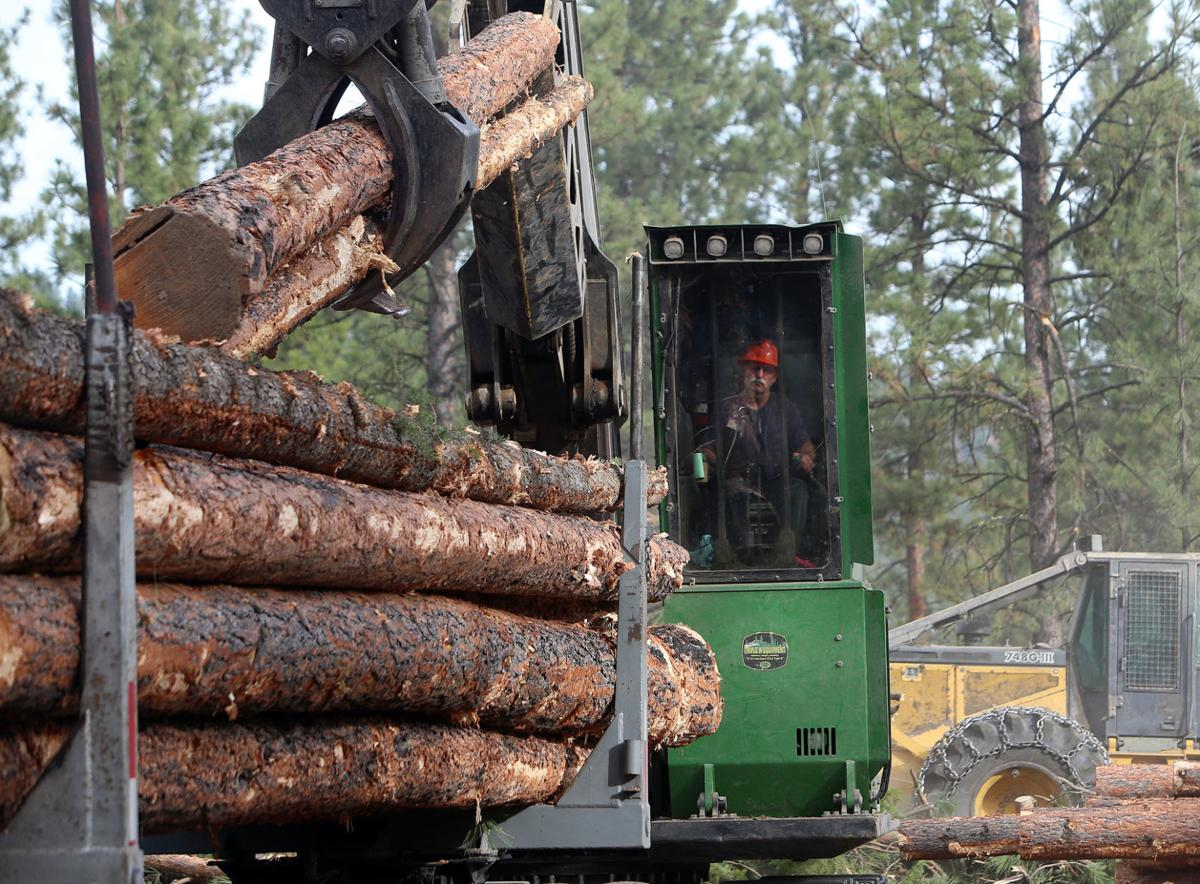 Court denies request for injunction on Darby timber sale