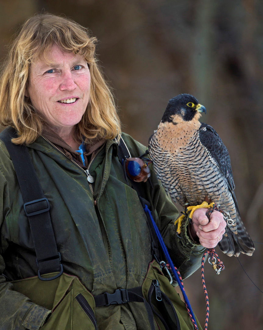 """Winged humor: Kate Davis' new book, """"Birds Are People Too"""" captures the lighter side of birding"""