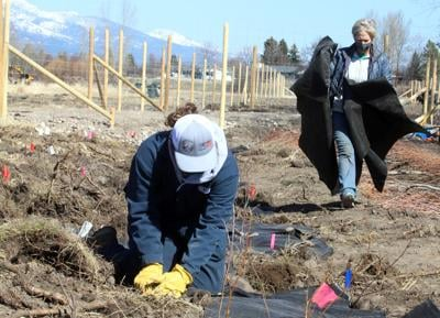 Roots Against Erosion: Skalkaho Bend erosion protection project takes shape