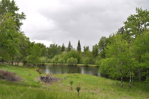 Conservation easement protects 55 acres near Hamilton