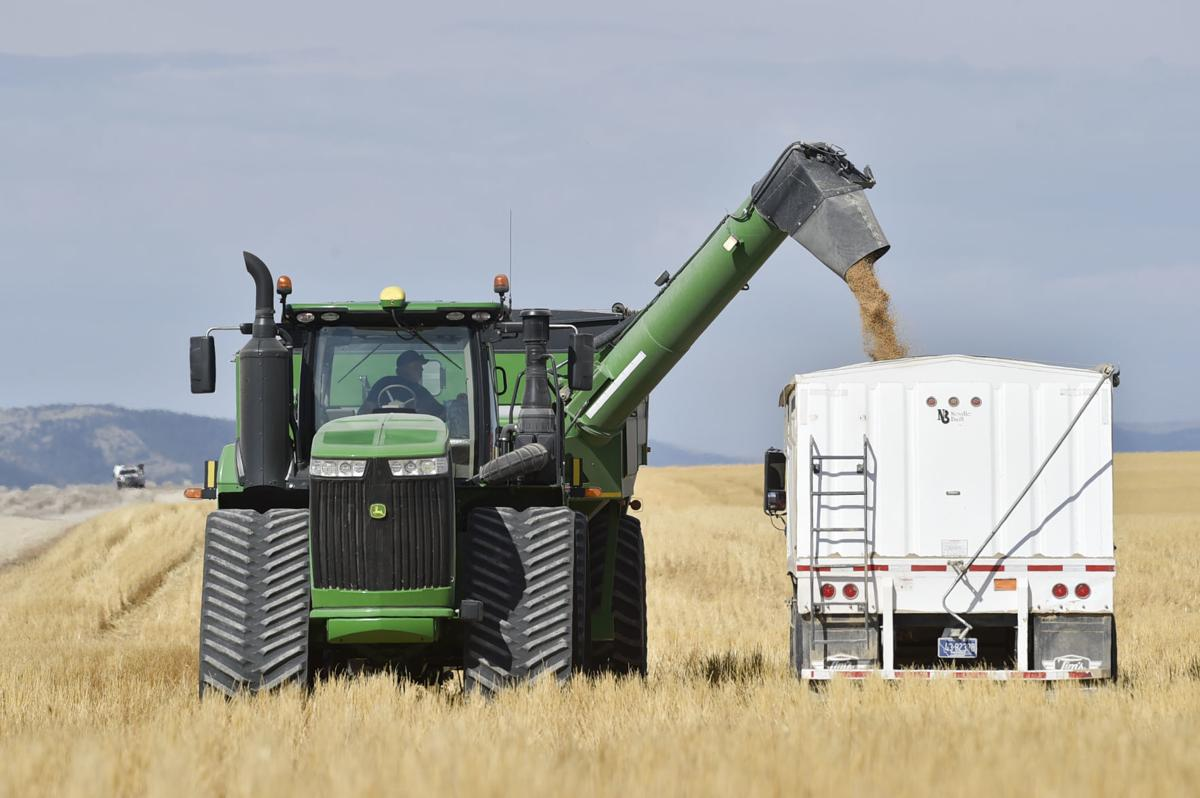 Harvested wheat is loaded into a truck