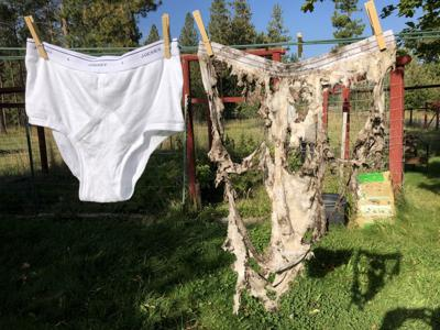 The Tighty Whitey Challenge: Bury some old underwear to learn about soil health