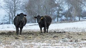 Producers prep herds for winter feed needs