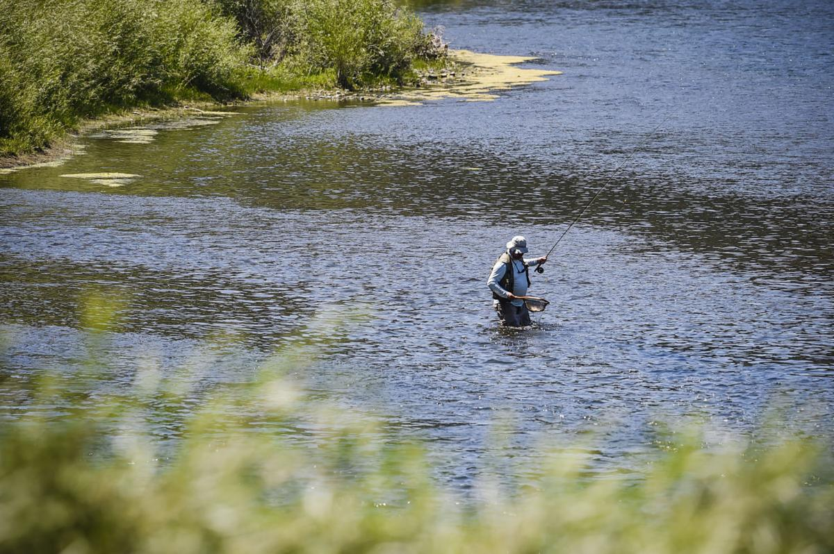 An angler nets a trout while flyfishing the Missouri River