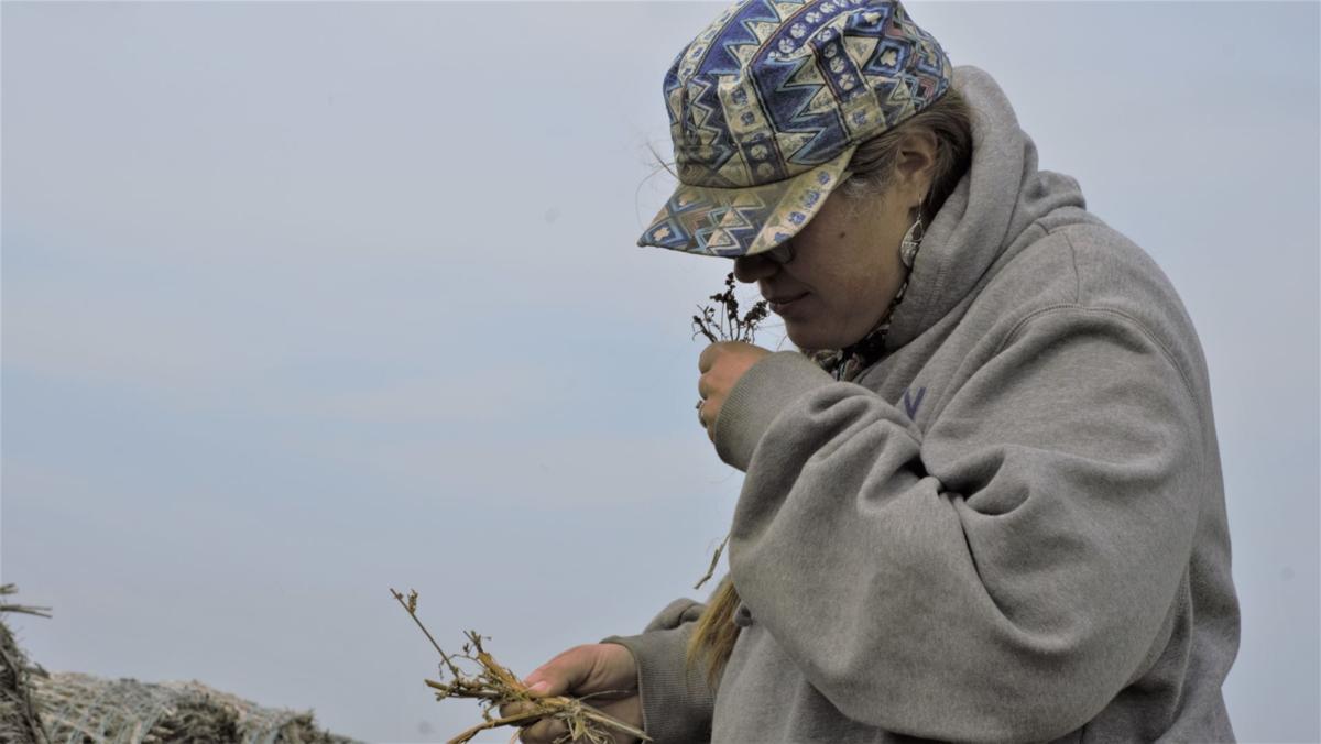 Amber Anderson, Hemp Farmer