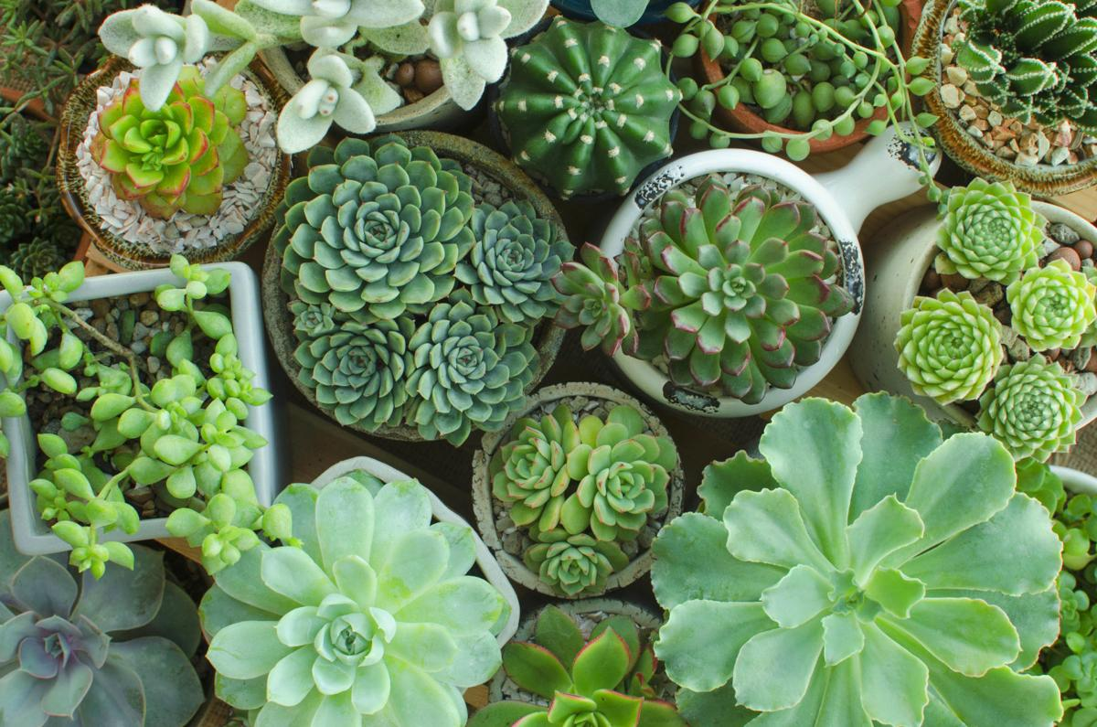 Dirty Fingernails Don T Like To Water Try A Succulent Local