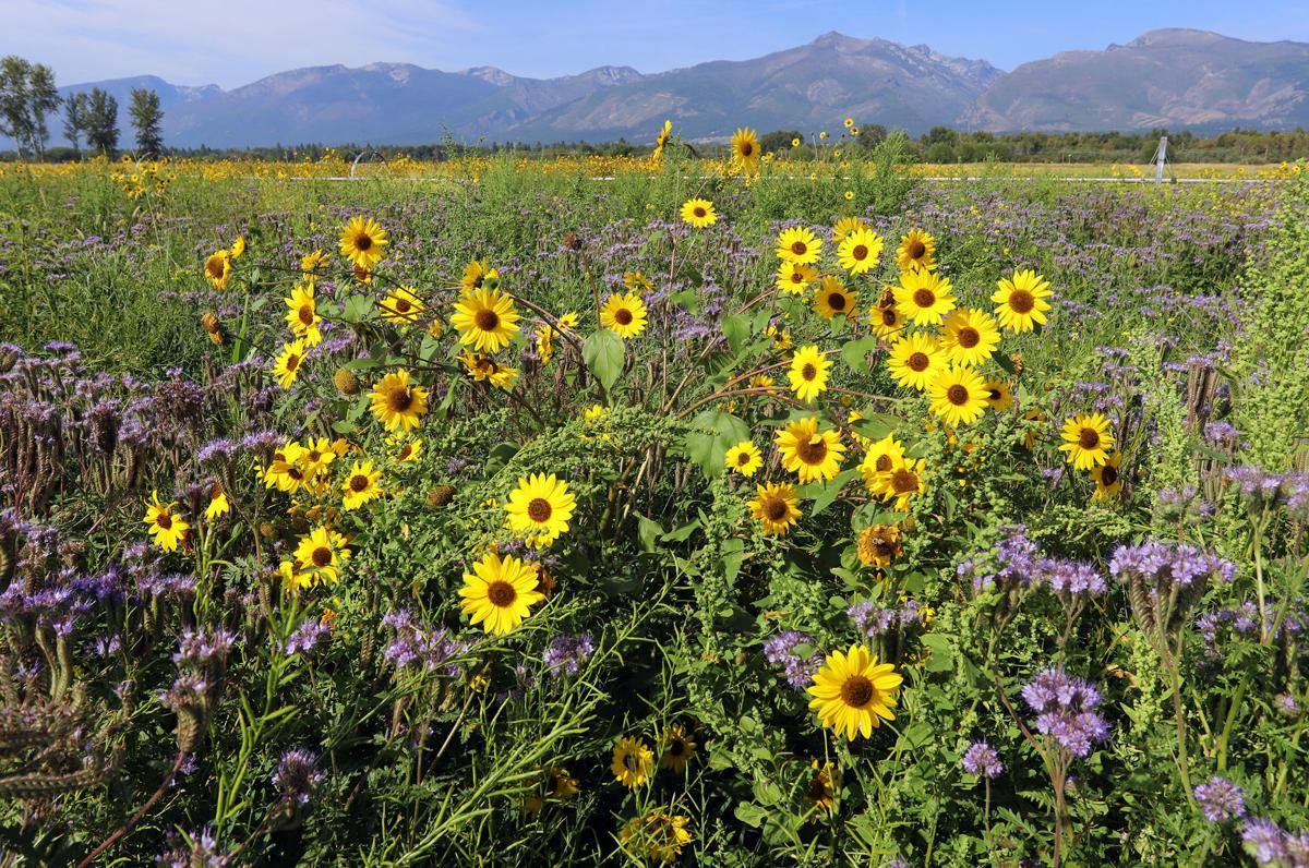 Honeybee Highway: Teller Refuge's 10-acre pollinator plot a boon for bees