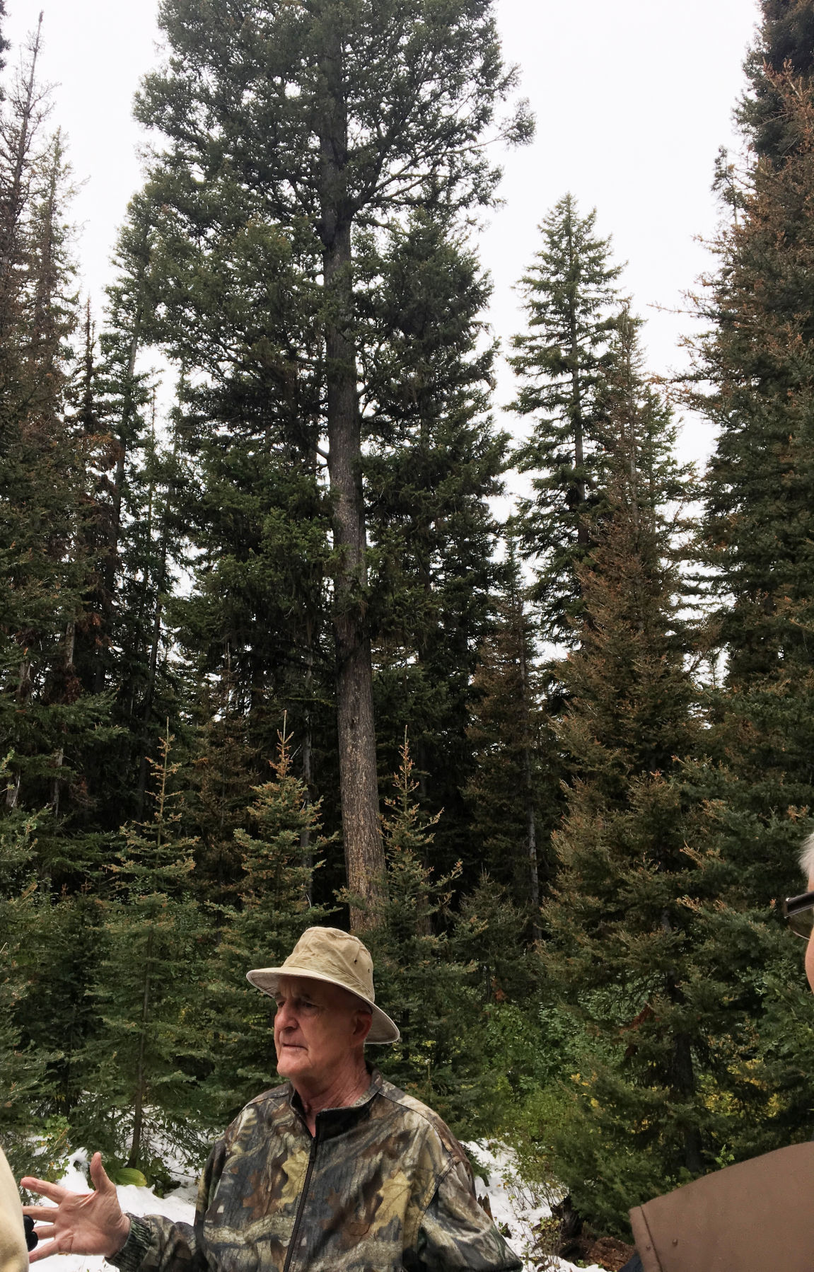 Furniss tree