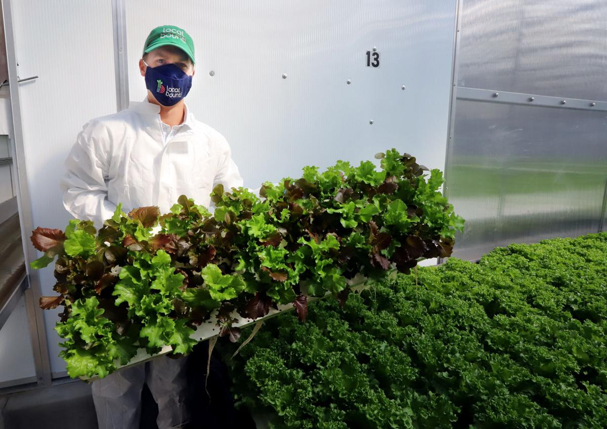 Local Bounti plants seeds for growth in Ravalli County