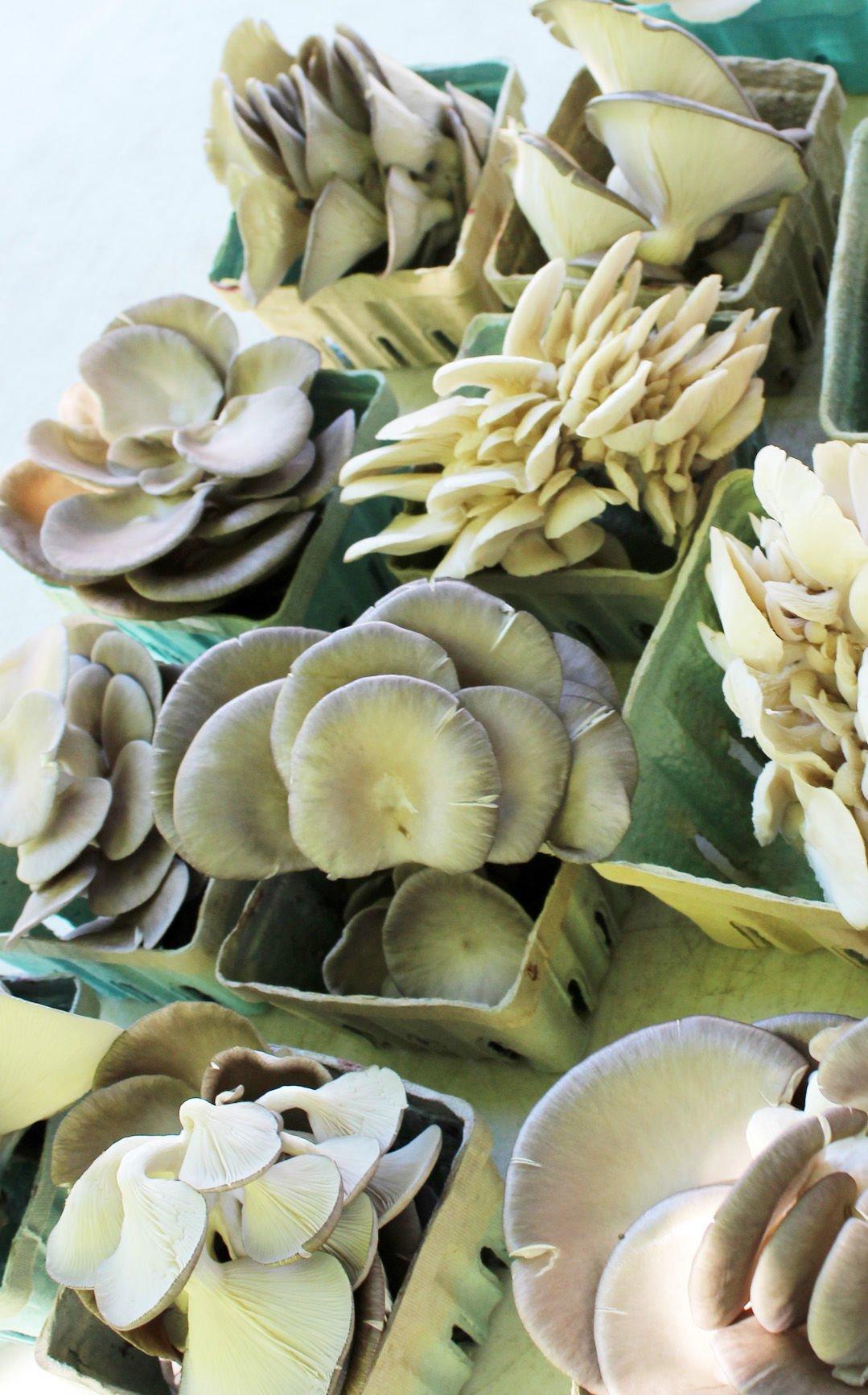 O'Hara mushrooms 2