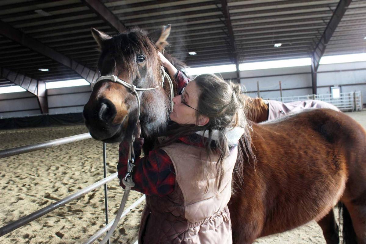 Equine Roxy and Schiffman