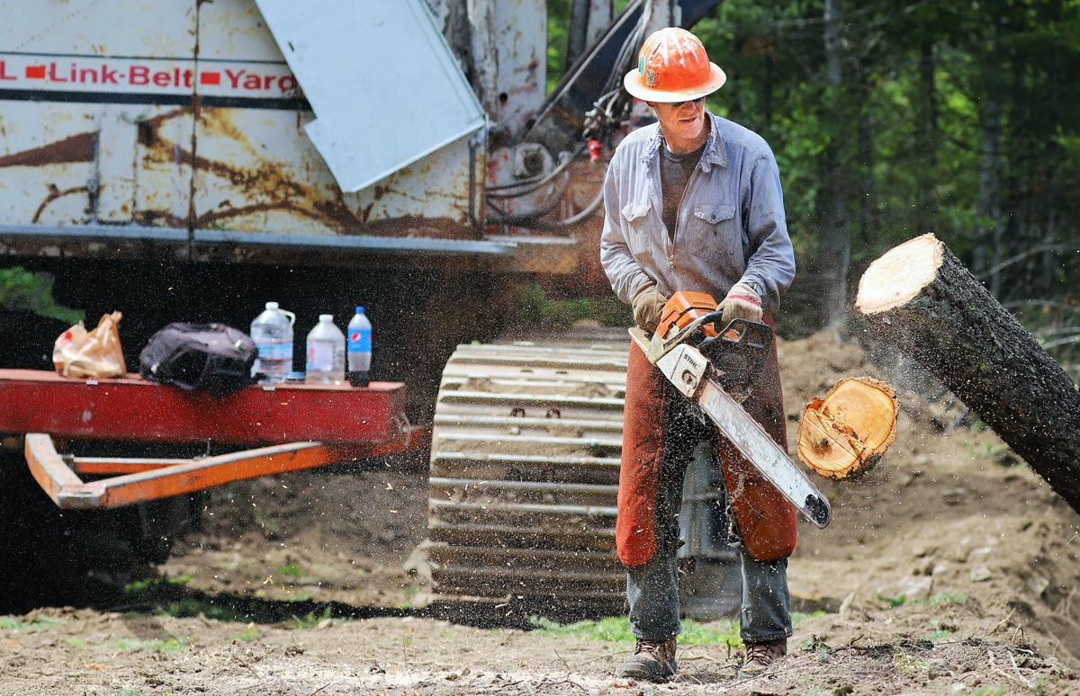 Logging begins on Meadow Vapor Fuels Reduction Project