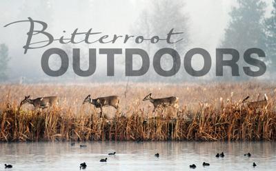 Bitterroot Outdoors