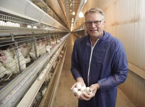Egg and poultry industries return strong, face challenges