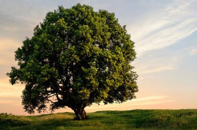 Tree, Arbor Day