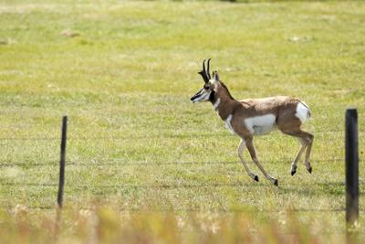 Feature Photo: Antelope on the move