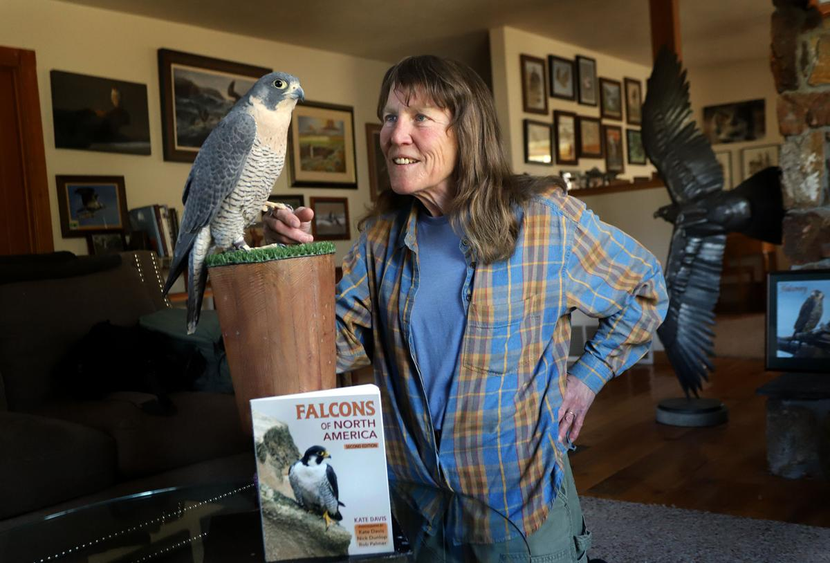 Taking flight: Davis opens doors into lives of falcons in new book