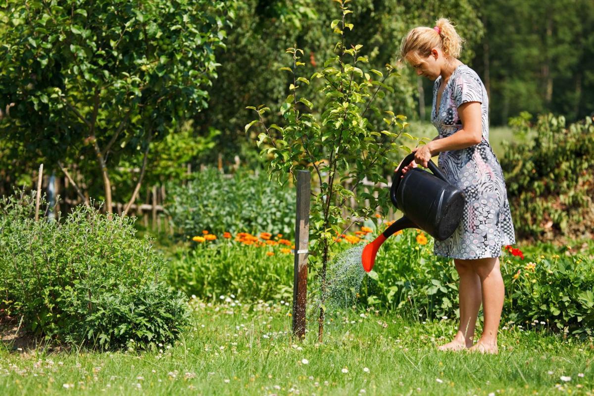 Woman watering tree