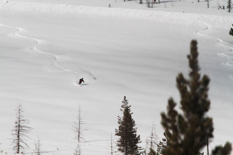 skier near trees