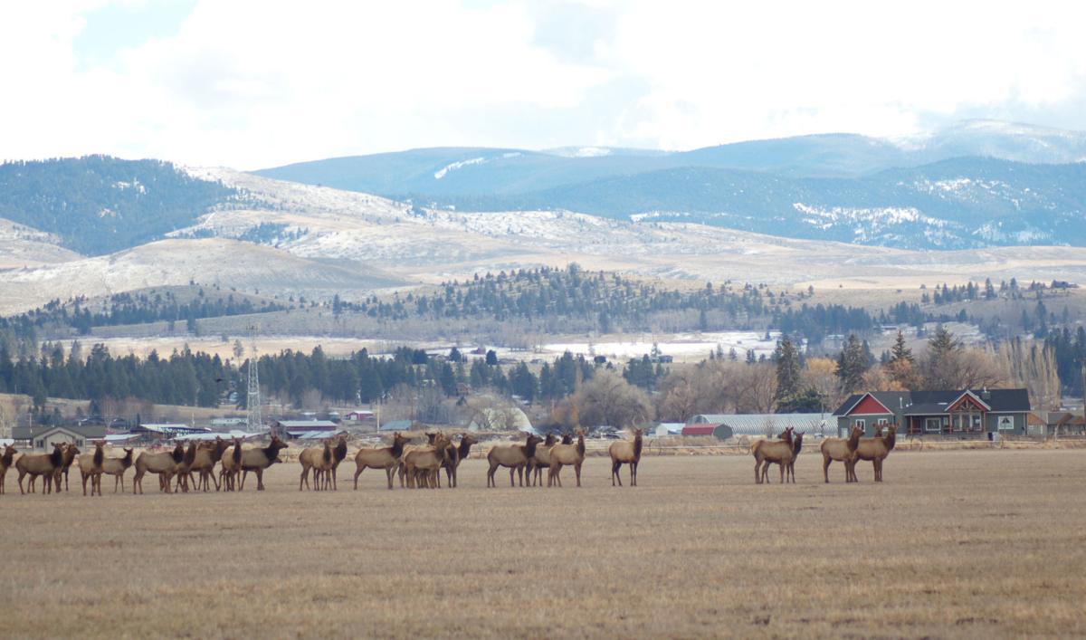Elk hangout
