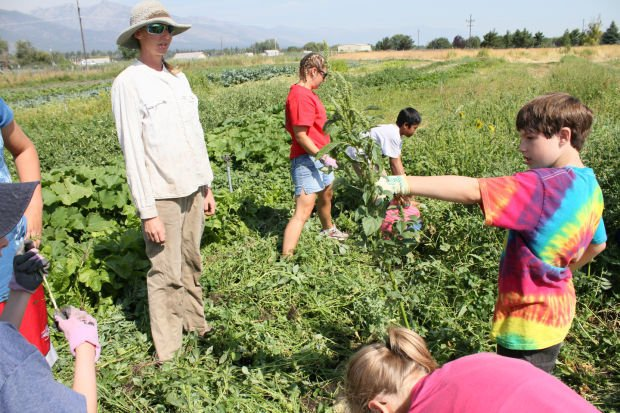 Sprouts camp: B.E.A.R. program teaches local kids about working on a farm