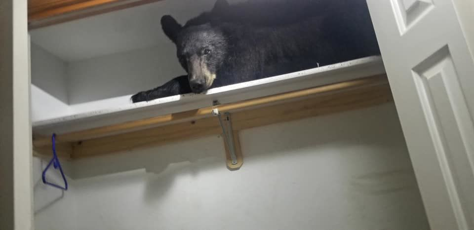 Bear in the closet