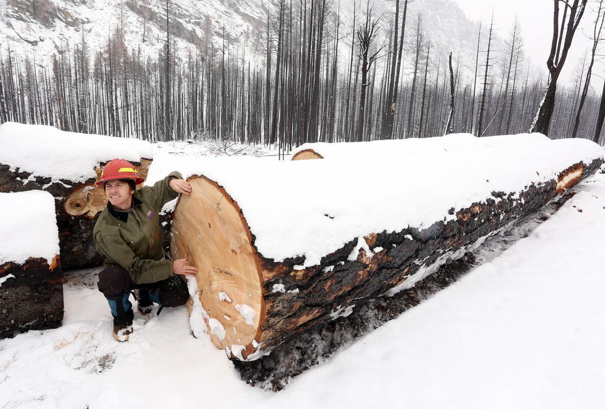 Roaring Lion Salvage ponderosa pine