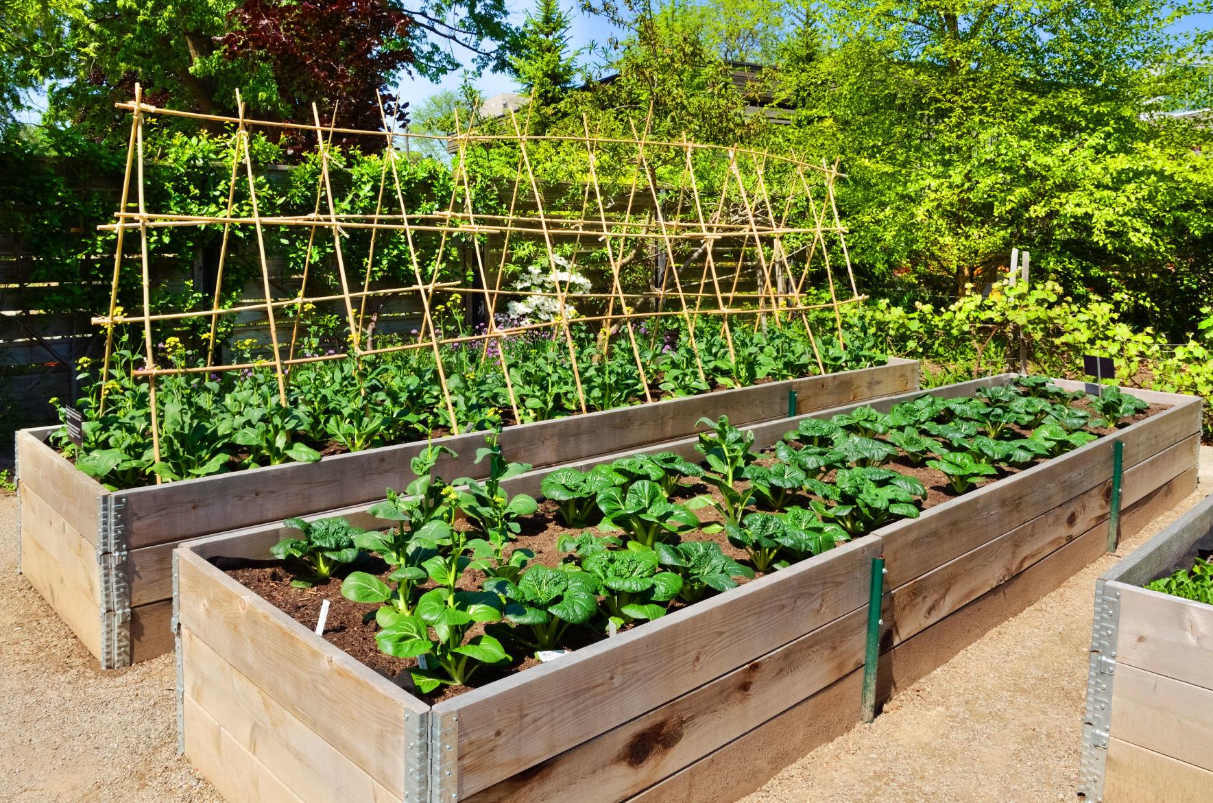 Picture of: Dirty Fingernails Raised Beds Can Make Gardening Easier Home Garden Ravallirepublic Com
