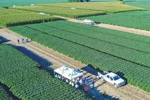 Crops, livestock benefit from on-farm research